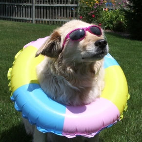 Mandy with Shades and a inner tube